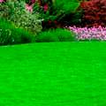 Искусственные газоны, лианы
