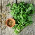 Семена пряных культур и трав