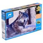 3D пазл 500 элементов «Волк», МИКС
