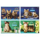 Альбом для рисования А4, 12 листов на скрепке «Котики», обложка мелованный картон, МИКС