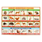 """Плакат """"Дикие животные России"""" 500х690 мм"""